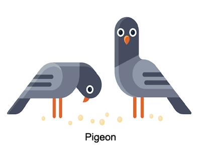 pigeon google algorithm updates